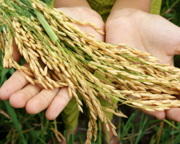 5 Things About GMO You May Not Have Known
